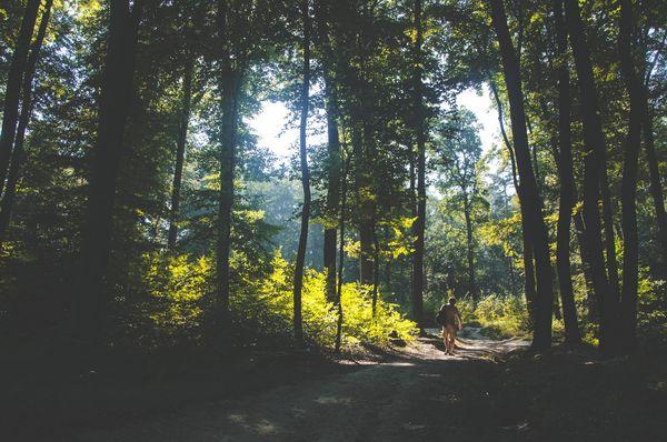 Mann geht einen Weg durch den Wald, Sonne bricht durch die Baumkronen