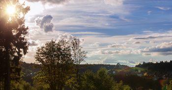 Wald in Winterberg. im Hintergrund ist ein blauer Himmel mit ein paar Wolken. Die Sonne schenit durch einen Baum hindurch