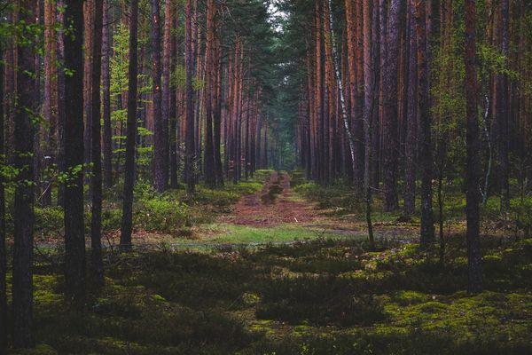 Wald durch den ein Weg führt