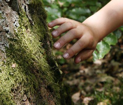 Eine Kinder Hand streicht über Moos an einem Baum