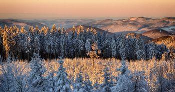 Dick mit Schnee bedeckte Bäume bilden eine schöne Winterlandschaft mit weiter Fernsicht.