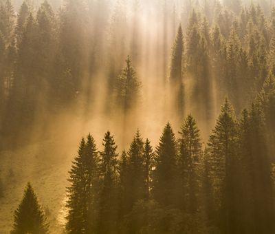 Sonne bricht durch den Nebel, der über den Bäumen hängt