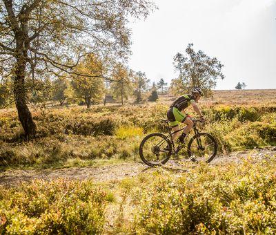 Biker fährt bei sonnigem Wetter über einen steinigen Trail