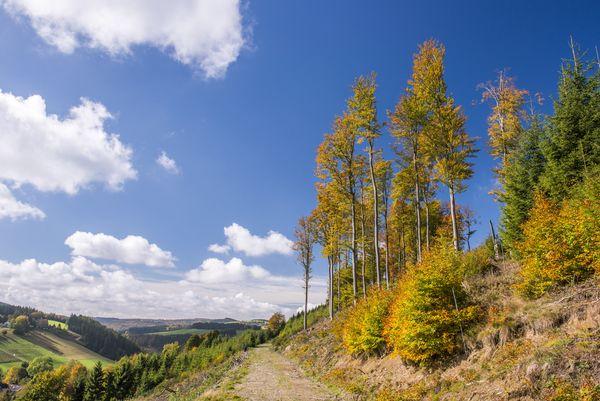 Wanderweg führt durch die herbstliche Landschaft