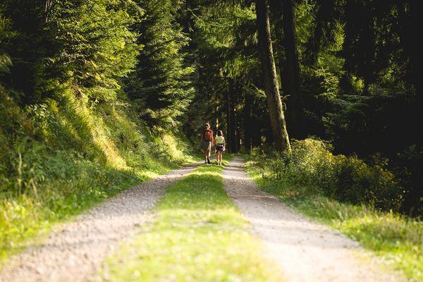Ein Schotterweg führt durch einen Wald