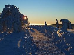 Ein Winterwanderweg über eine Höhe mit einzelnen Bäumen bei Sonnenschein